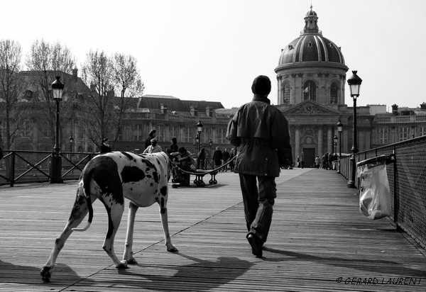 6ème arrondissement - Promener son chien sur le Pont des Arts