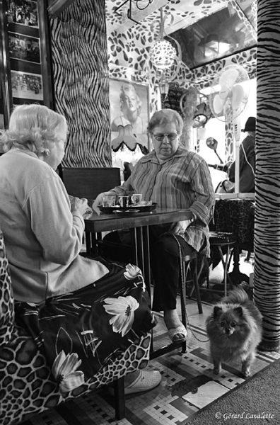 3ème arrondissement - Le petit chien du Café Le Temple