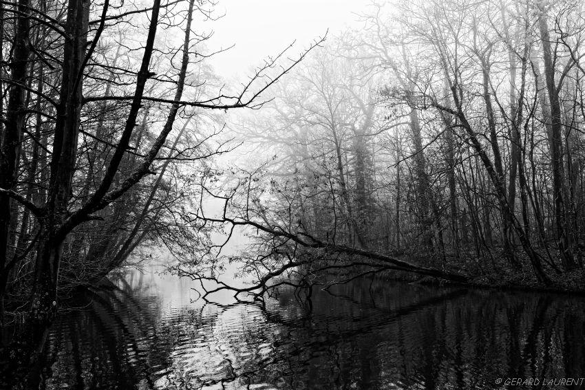 12ème arrondissement – Le bayou du bois de Vincennes