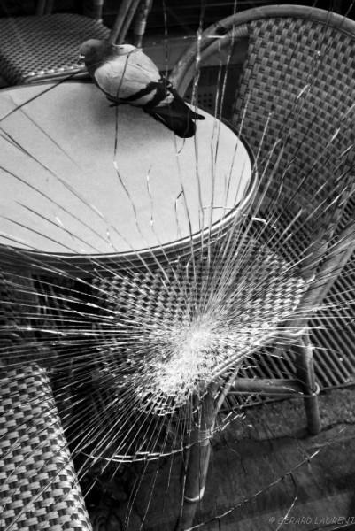 020015 - le pigeon en terrasse rue Montorgueil