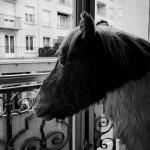 7ème arrondissement – A quoi rêvent les poneys chez Deyrolle?