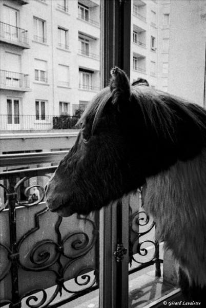 7ème arrondissement - A quoi rêvent les poneys chez Deyrolle?
