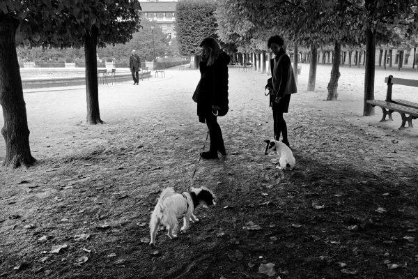 1er arrondissement - Se promener au jardin du Palais Royal