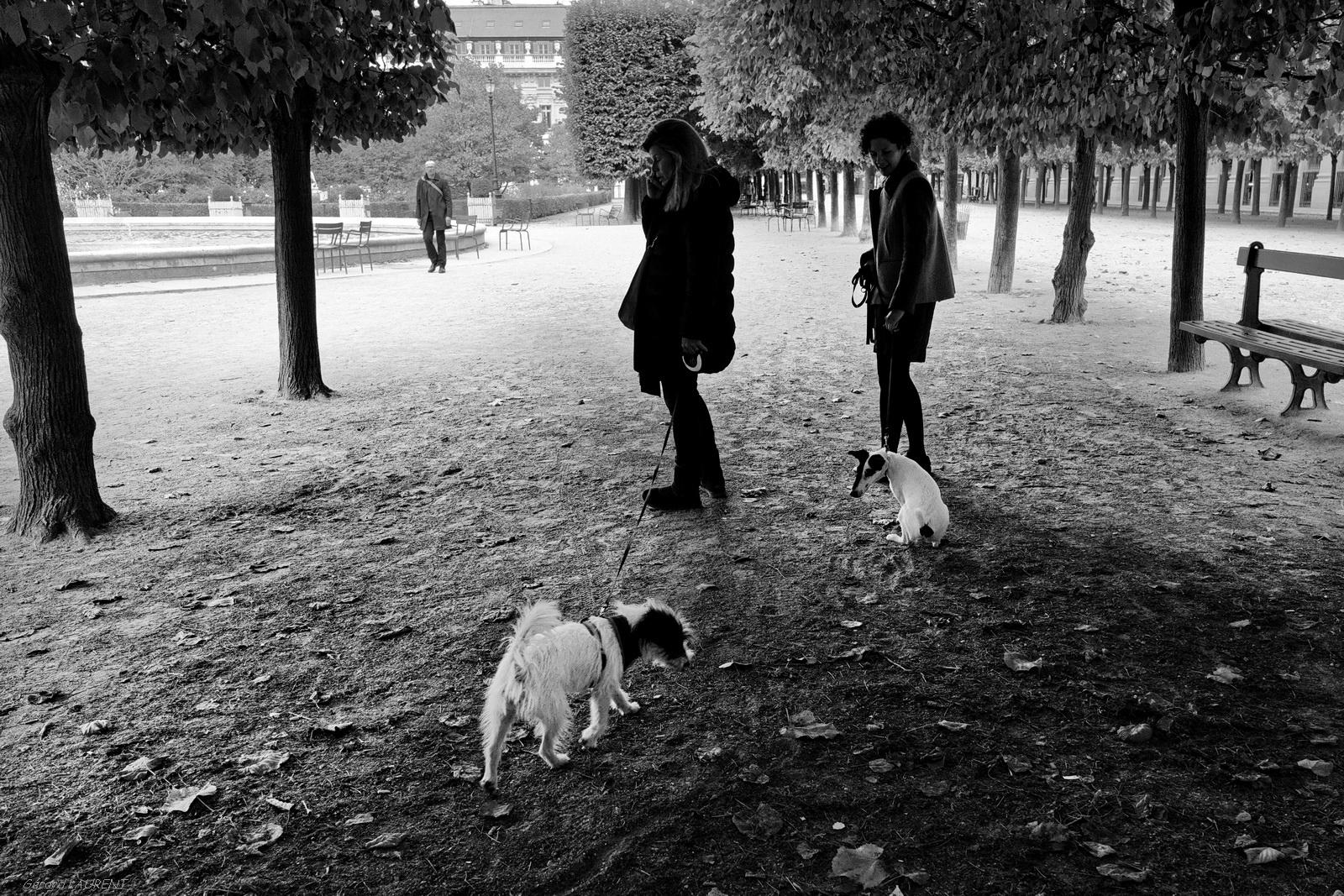 Se promener au jardin du Palais Royal