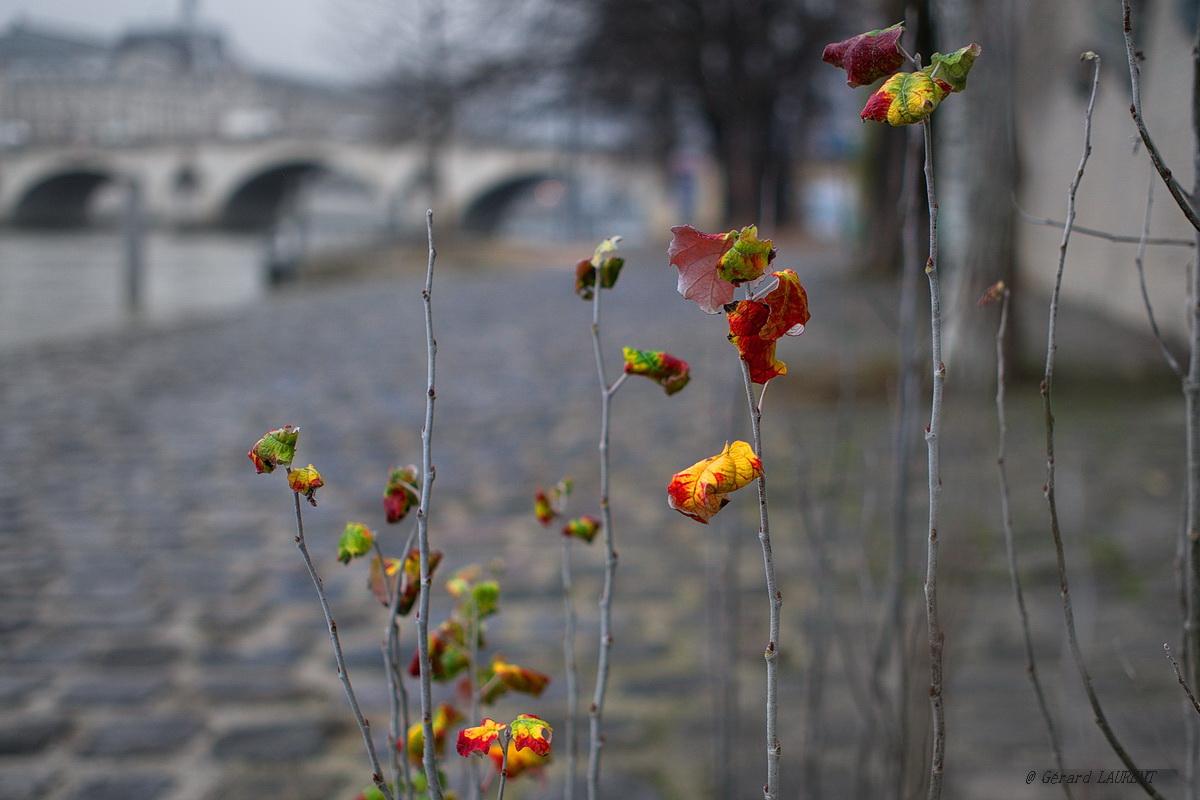 Promesse de printemps quai du Louvre