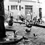 18ème arrondissement – L'enfant et les pigeons place Emile Goudeau